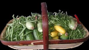 Salad Ways Basket