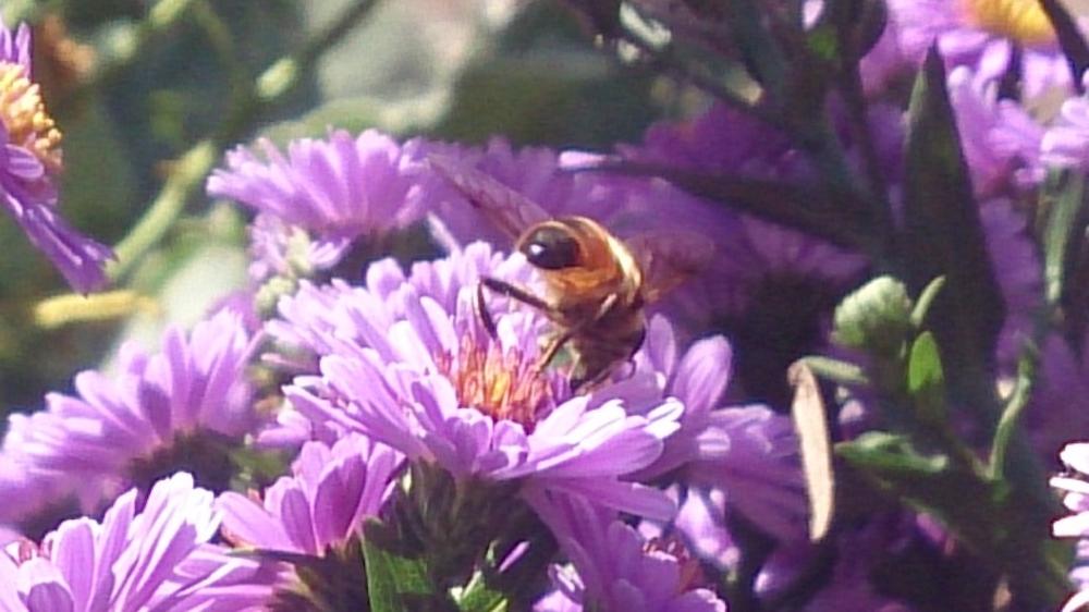 Salad_Ways_Purple_Flowers_Bees